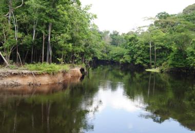 Amazonie équatoriale